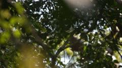 Forest jungle vegetation change focus Stock Footage