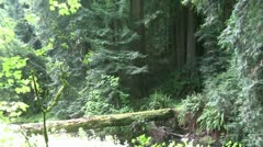 Muir Woods, Stock Footage