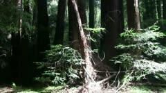 Muir Woods, Stock Footage