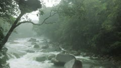 Daintree National Park Queensland, Australia Stock Footage
