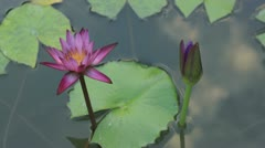 Waterlily flower and moving cloud reflection Stock Footage