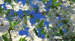 Spring time and fruit flowers 9 Stock Footage