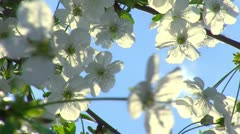 Spring time and fruit flowers 8 Stock Footage