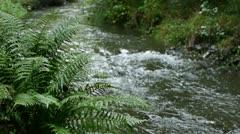 0124-dogstream-ferns1 Stock Footage
