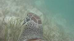 Green Turtle's Perspective Stock Footage