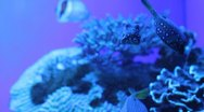 Stock Video Footage of Aquarium