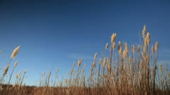 tall grass - stock footage