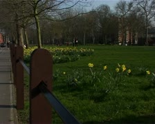 Daffs on green1 Stock Footage