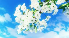 Fruit flowers and Spring time 7 Stock Footage