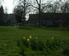 Daffs on green2 - stock footage