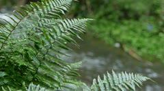 0125-dogstream-ferns2 Stock Footage