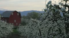 Pear Orchard in Hood River Oregon with Red Barn 1080p Panning Stock Footage