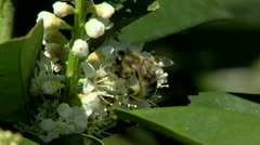 Bee Stock Footage