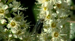 Fly Stock Footage