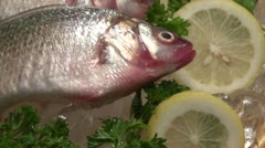 Dolly shot over fresh fish Stock Footage