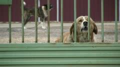 Beware of dog Stock Footage