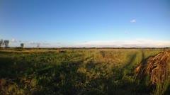 Rural scene Stock Footage
