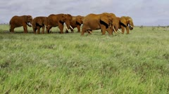 Small Herd of Wild African Elephants Stock Footage