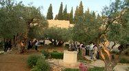 Olive garden in  gethsemane-crane shot Stock Footage