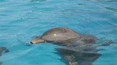 Dolphin marine park Stock Footage