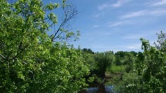 Willow branches and green meadow Stock Footage