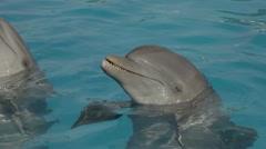 Dolphin aquarium Stock Footage