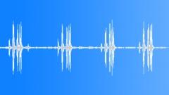 Dark-capped bulbul calling Sound Effect