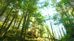 Beautiful Waterfall in Lush Forest Tilt Up Stock Footage