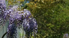 Purple flowers bunch on the wind Stock Footage