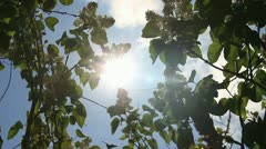Sky part with clouds and bright sun disk vision through white flowers lilac Stock Footage