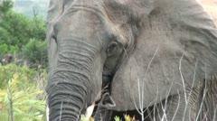 Elephants 24 - stock footage