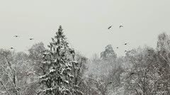 Flock of birds sit on the snow-covered trees in forest Stock Footage
