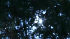 Tree Sunlight 07 Dolly R Morning Pine Trees Stock Footage