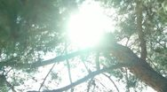 Stock Video Footage of Tree Sunlight 10 Dolly R Pine Trees SD wide