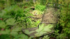 Garden chair in Seattle p-patch - 1080p Stock Footage