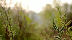 The branches of a willow blossom. Stock Footage