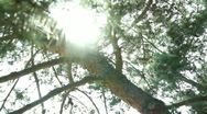 Tree Sunlight 24 Focus In Out Pine Trees SD wide Stock Footage