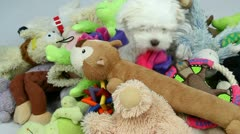 Adorable Puppy Climbs Over Pile Of Dog Toys Stock Footage