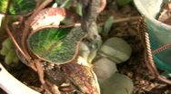 Stock Video Footage of Alligator Lizard 04 SD wide