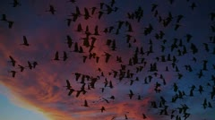 Flock Of Birds Fly At Sunset - stock footage