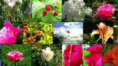 Natural flower collage Stock Footage