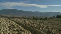 Italian farm land glidecam Stock Footage