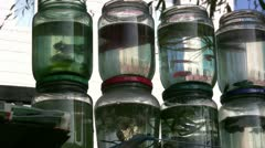 Fish in jars for sale on the streets - China Stock Footage