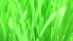 Flight over fresh new green grass, macro view Stock Footage
