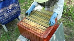 Beekeeper and bees. Beekeeper lady opening hive. Apiary. Stock Footage
