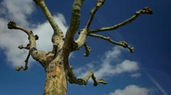 White clouds blue sky tree time lapse 1080p Stock Footage
