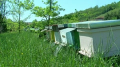 Beehives Stock Footage