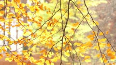 Autumn leaves on swaying branches - stock footage
