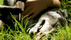 Dog playing with hands Stock Footage