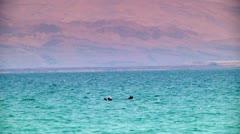 Dead Sea - Swimming Stock Footage